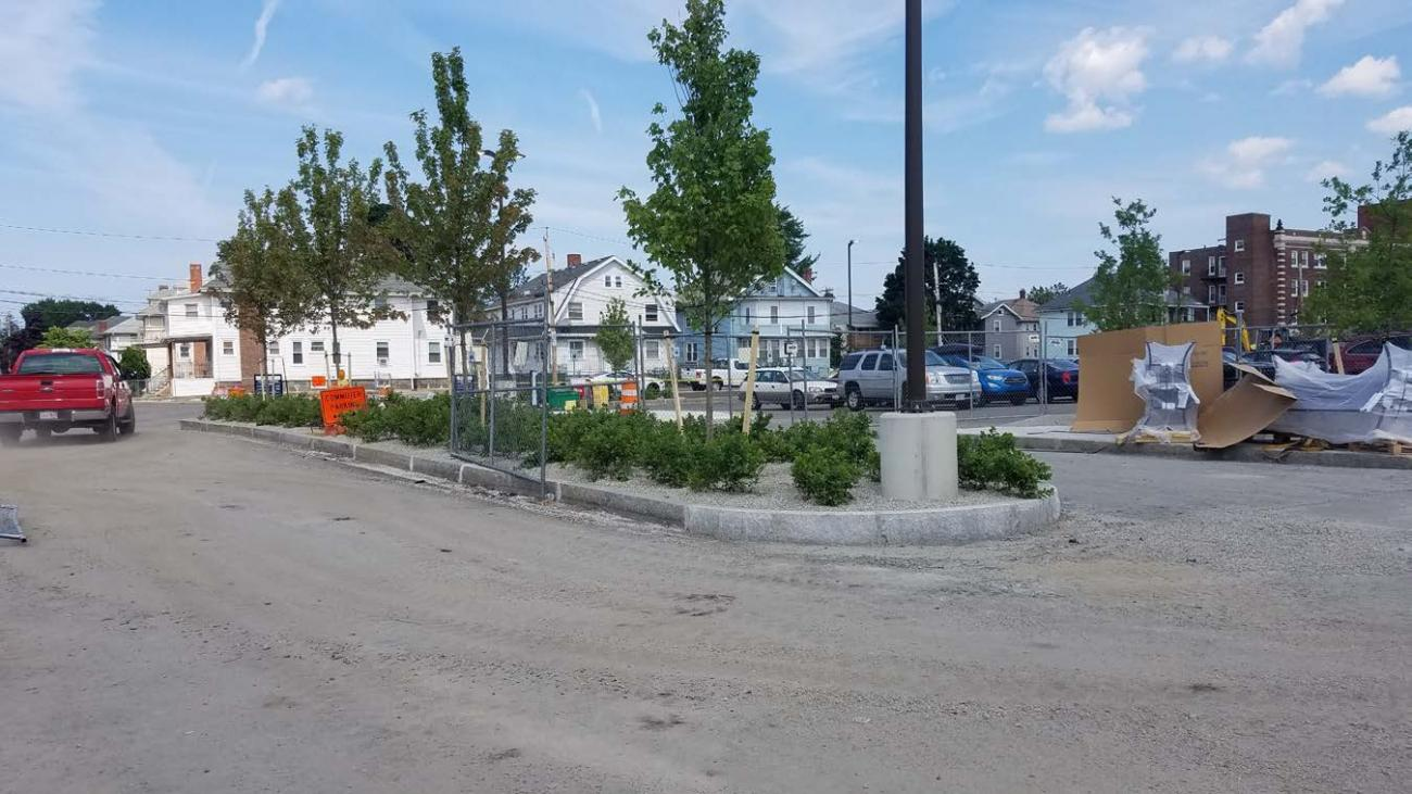 Bushes and trees planted outside Wollaston (July 2, 2019)