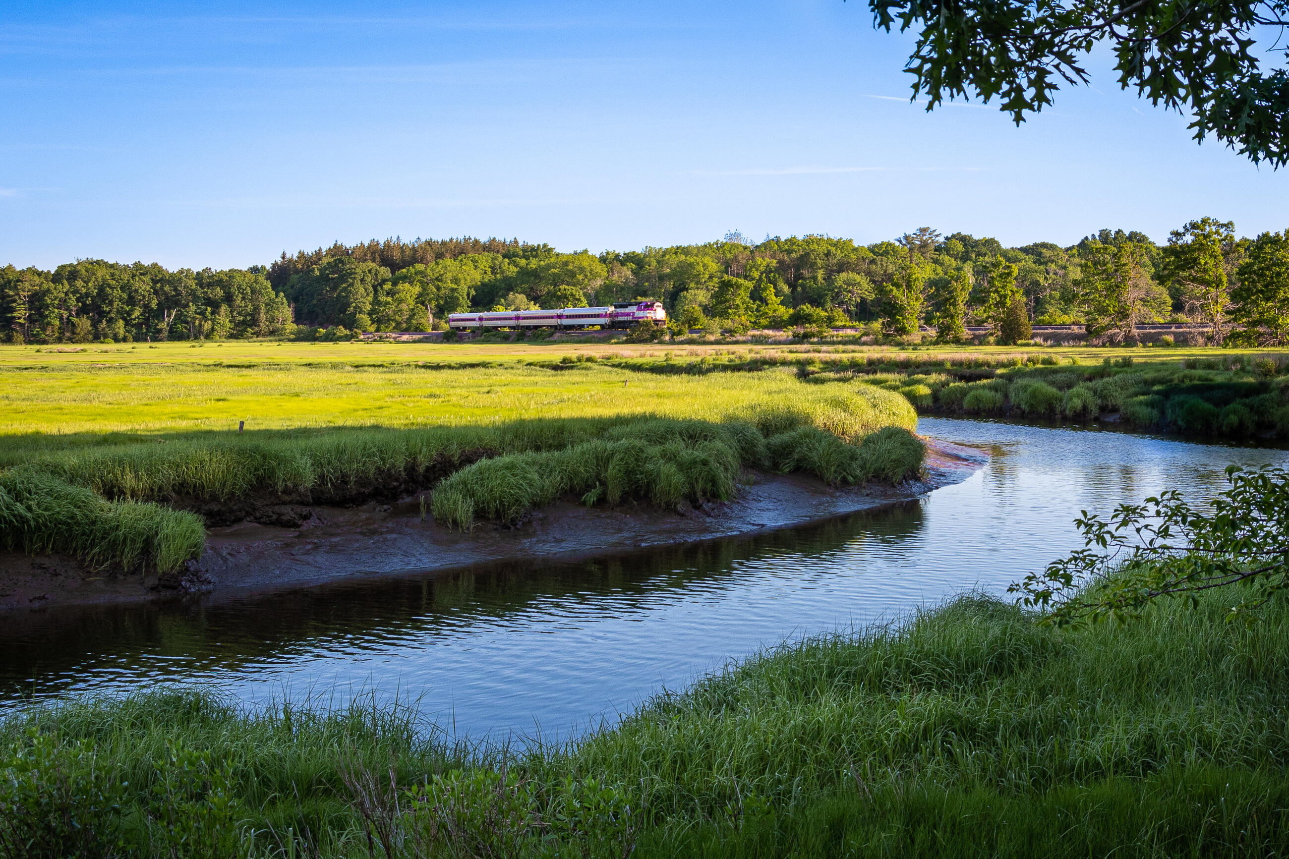 Commuter Rail passing by wetlands