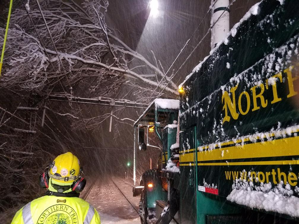 green-line-d-branch-down-tree-crew.jpg