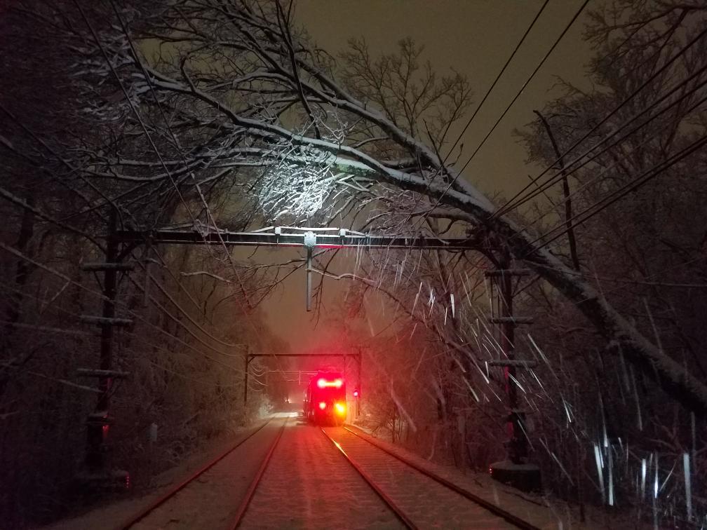 green-line-d-branch-down-tree-train.jpg